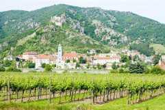 20141006190212475200_shutterstock_60925426_Durnstein, vineyard in Wachau Region, Lower Austria, Austria
