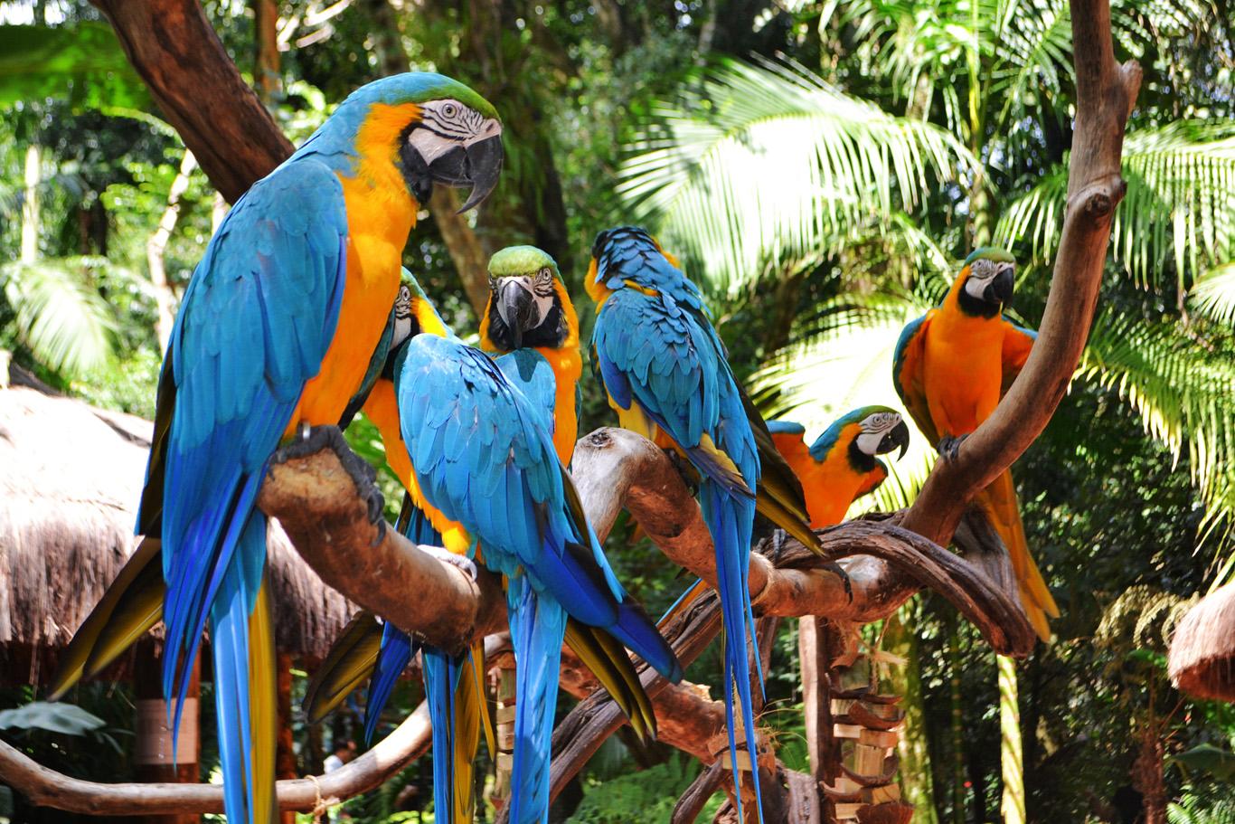 Bird Park in Iguassu Falls (Parque Das Aves, Foz do Iguacu), Brazil —  Adventurous Travels | Adventure Travel | Best Beaches | Off the Beaten Path  | Best Countries | Best Mountains Treks